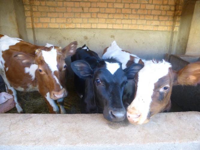Petits nouveaux de notre élevage d'Anjomakely - 2